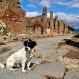 Stray dog. March 2014. - Pompeii, Italy